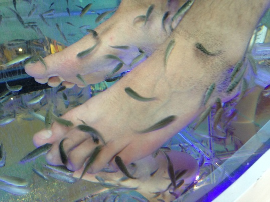 Here's a closeup of the fish in action. It just tickled and felt like small vibrations. While the end result wasn't nearly as smooth as a pedicure, it wasn't bad for $10.