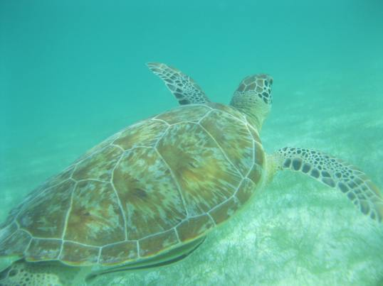 The best part of snorkeling was the cute sea turtles - they would pop their heads above water every few minutes to breath.