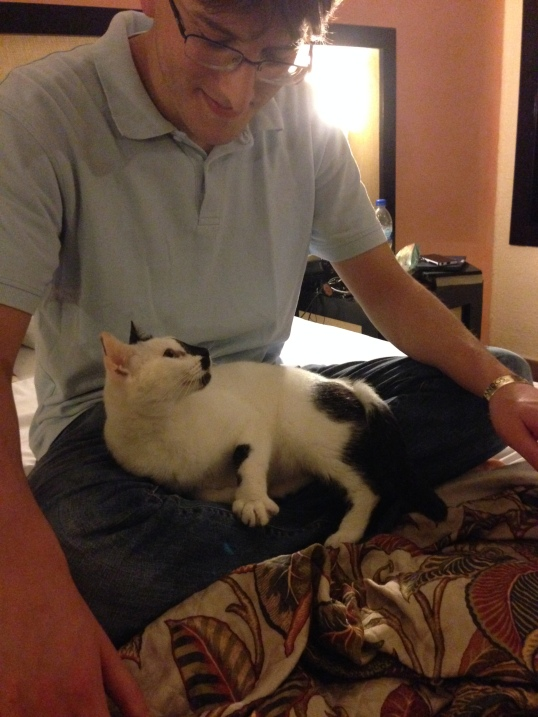 """In addition to monkeys, donkeys and lizards, the resort had approximately 10 cats that lived there. They had their own area called """"Cat Cafe."""" One of these adorable felines became attached to us - we name her Rosa and she visited us a couple times in our room."""