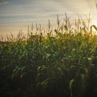 Children Of The Corn: Stephen King