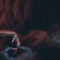 The Monkey's Paw: W.W. Jacobs