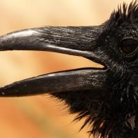 The Raven: Edgar Allan Poe